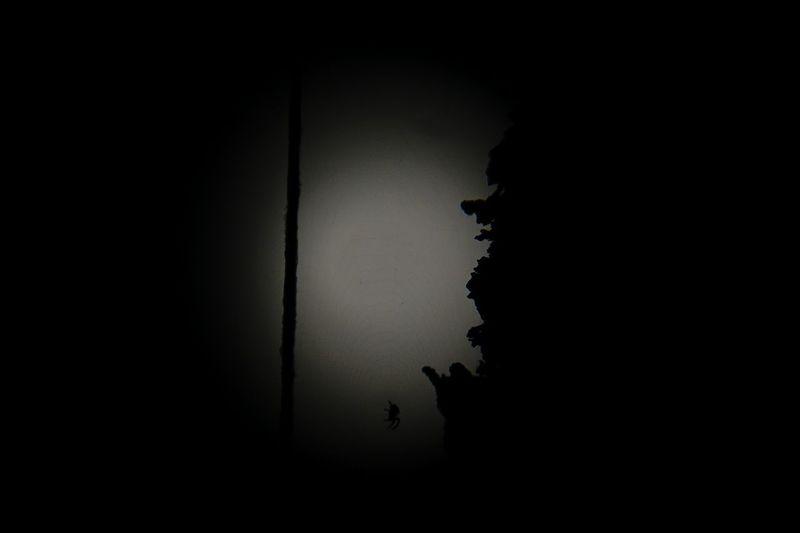 by night Moon Moonlight Spider Moonlight Architecture