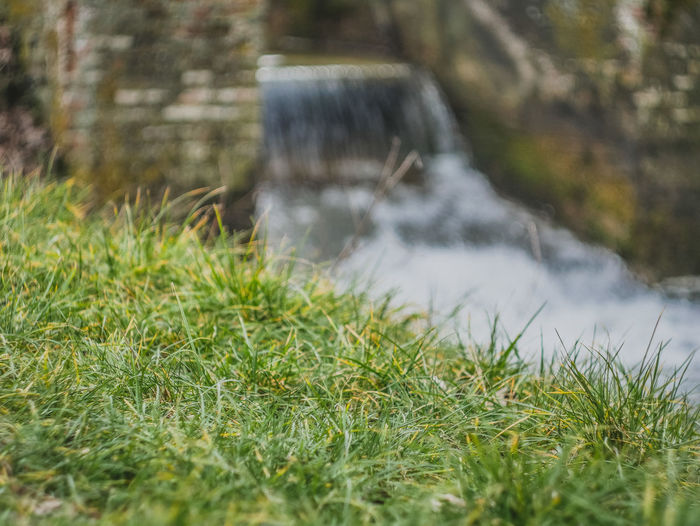 Plant Grass Water Nature Motion No People Day Green Color Selective Focus Blurred Motion Land Growth Outdoors Long Exposure Beauty In Nature Field Flowing Water Flowing Wet