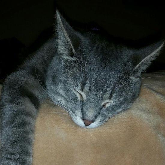 Rowdy  Mykittybuddy Sleeping Cat Taking Photos
