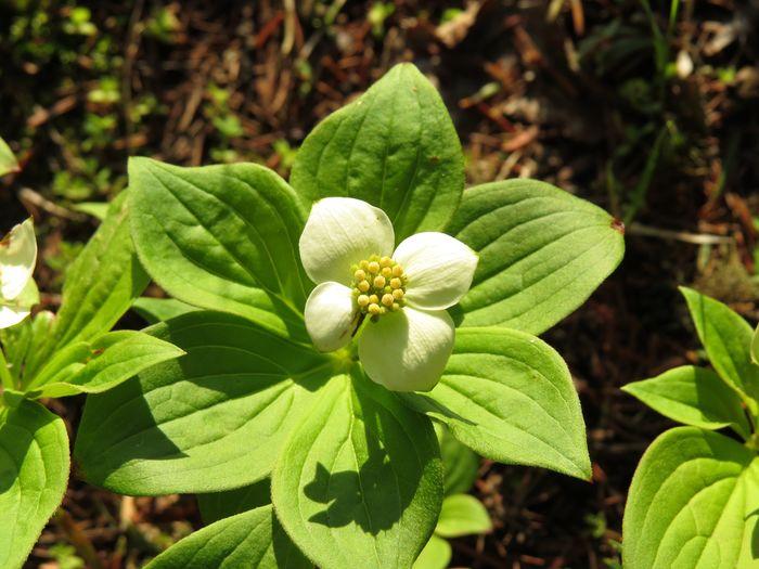Botany Plant