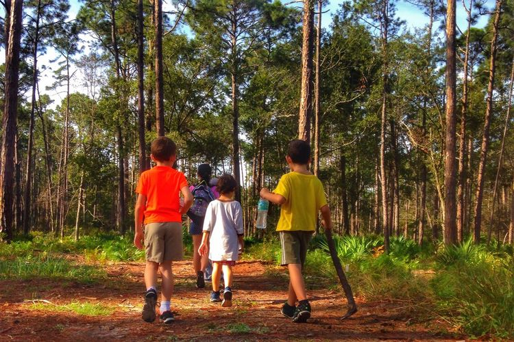 Rear view of siblings walking in forest