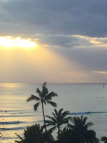 Waikiki Sunset Waikiki Beach Hawaiian Sunset Pacific Sunset Clouds & Sky Pacific Sky Pacific Ocean Sky Pacific Ocean View Island Of Oahu, Hawaii Palm Trees 🌴 No People Silhouette An Eye For Travel