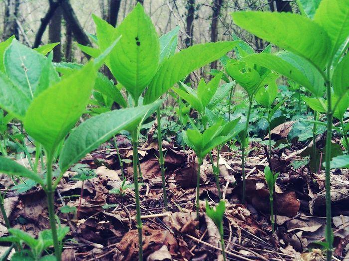 Leaves on plant