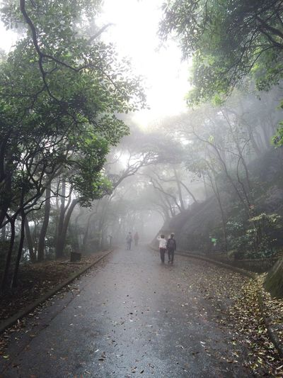 EyeEm Best Shots EyeEm Nature Lover HongKong Tai Tam Country Park Tai Tam Reservoirs Nature Hiking Adventure Foggy Walking