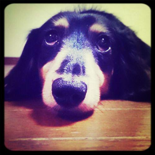ma baby I Love My Dog