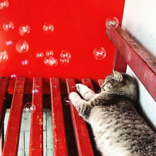 Red One Animal Animal Themes Pets Close-up Mammal No People Domestic Animals Indoors  Day