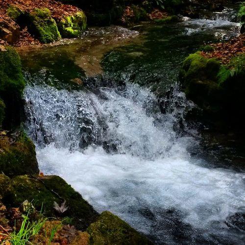 Badurach Little Waterfall Like yolocoolwalkwoodsimpressionswaternaturewaterdropsperfectpicoftheday