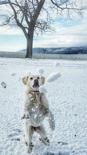 Dog playing with snow