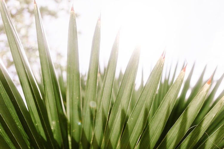 Puerto Rico San Juan Ann Ilagan Photography Beauty In Nature Blade Of Grass Bright Close-up Day Dew Field Freshness Grass Green Color Growth Land Leaf Nature No People Outdoors Palm Leaf Plant Plant Part Selective Focus Sunlight Tranquility