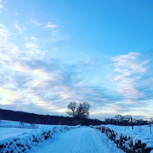 Perspective Trail Running Sunrise Dawn Snow Cold Temperature Winter Nature Beauty In Nature Weather Landscape Sky Frozen Cloud - Sky Tranquil Scene No People Outdoors Tree