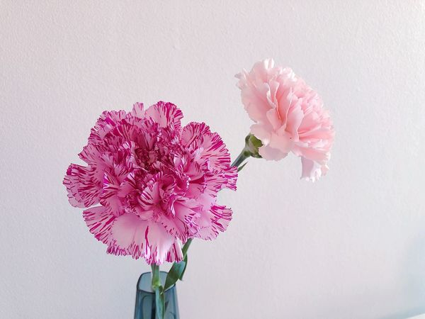 Flowering Plant Freshness Fragility Flower Vulnerability  Beauty In Nature Pink Color