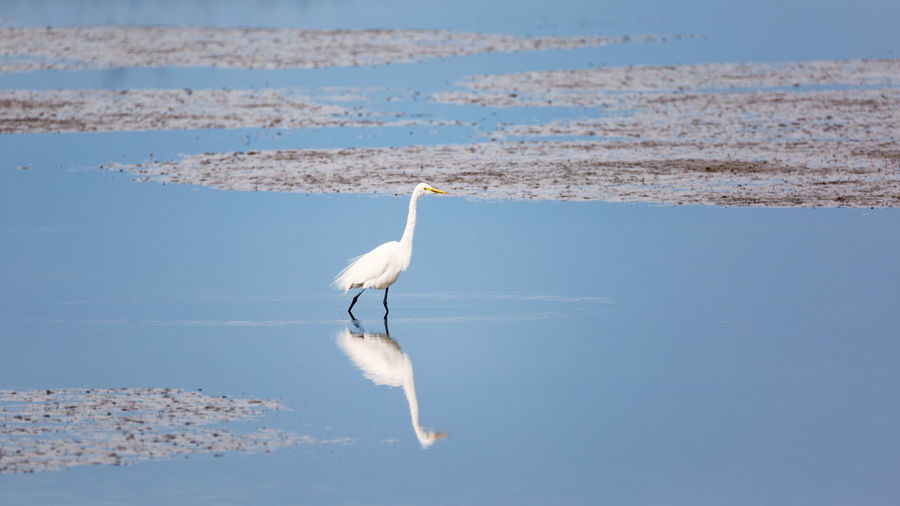 Animal Themes Animal Wildlife Animals In The Wild Bird Day Egret Great Egret Heron Nature No People One Animal Outdoors Perching Reflection Water