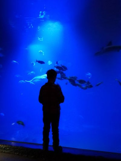 I am blue #MobilePhotography #breslau #wroclaw #wroclove #travel Aquarium Silhouette Sea Life Standing One Person Fish Animals In Captivity Underwater Blue Water One Man Only Living Organism Large Group Of Animals Indoors  Travel Destinations Real People Rear View Whale Shark