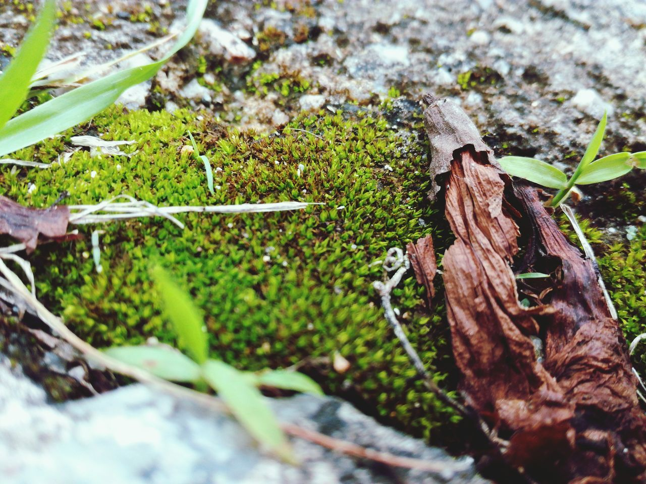 leaf, selective focus, no people, nature, day, growth, outdoors, plant, green color, close-up
