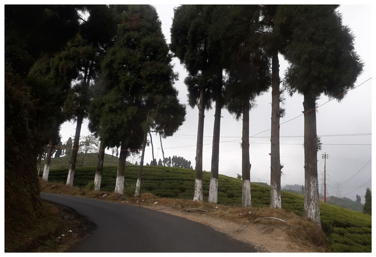 Trees by road against sky