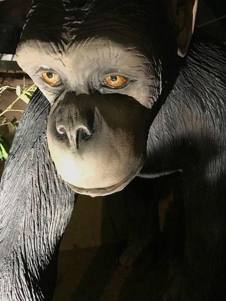 Chimpanzee Close-up Portrait Art And Craft Looking At Camera Statue Sculpture