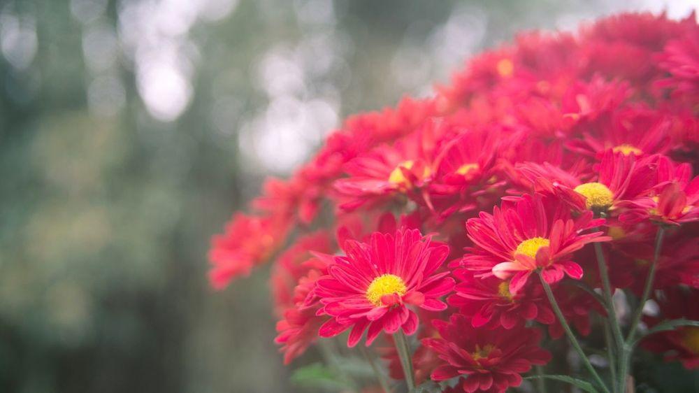 被花淹没,不知所措 花 植物 汕头 胶片 微距 First Eyeem Photo Swatow China Shantou