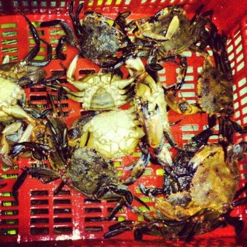 Las encontramos #alaricanecora #mariscazo #omarisquiño Mariscazo Omarisquiño Alaricanecora