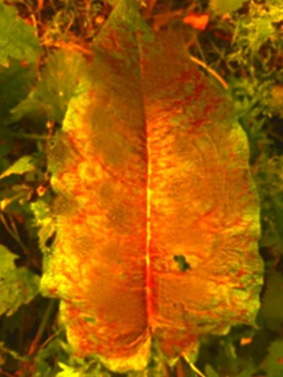 Ashford Kent Taking Photos Leaves Leaves Only Leaves Deep Red Deep Colors Rich Colors Nature Photography Abstract Photography No People Makes You Think Walk In The Woods