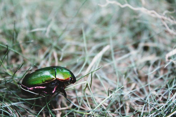 Meskipun banyak kumbang di taman tapi hanya kau yg mencuri hatiku