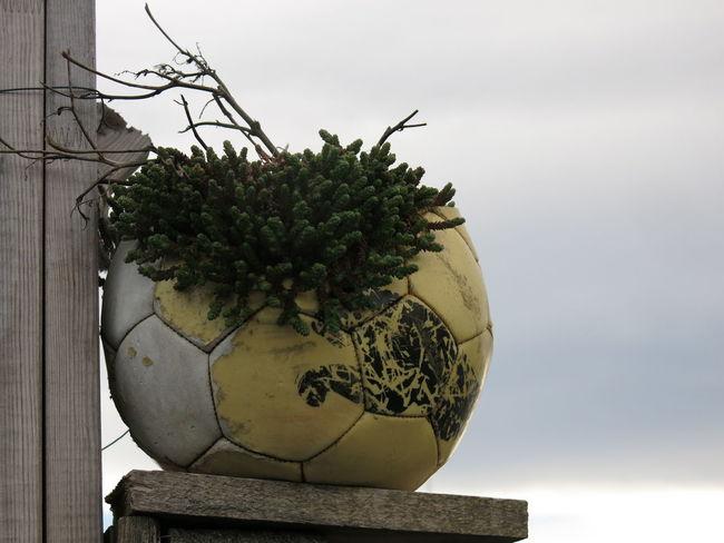 Ball Flower Flowerpower Football Fussball Garden Lifestyle Plant Sport Urban Urban Garden Urban Gardening