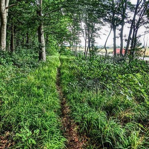 Sklblog A7 Trail A7trail