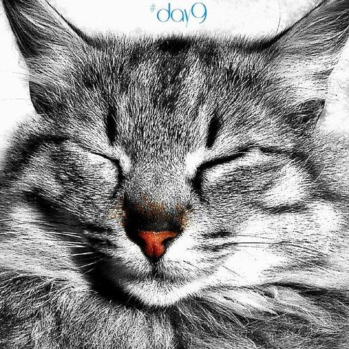 Baciati dal sole. 100happydays Day9 Cats Cat dreaming pet catoftheday photooftheday picoftheday igersteramo igersItalia igersAbruzzo sun
