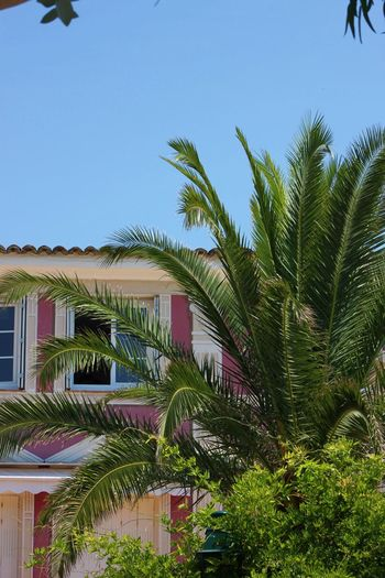 Architecture Côte D'Azur EyeEmNewHere Grimaud Holiday Architecture Building Exterior Clear Sky Day Enjoying Life Growth Keeping It Simple Low Angle View Nature No People Nofilter Outdoors Palm Tree Sky Summer Tree
