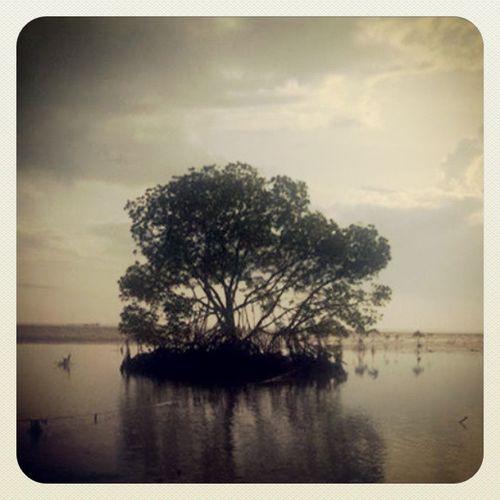 Hidden beauty. Palawan Mangrove Igersmanila Igers thechallengigers earlybird