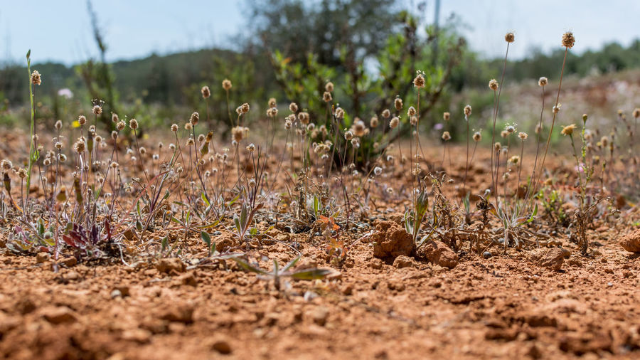 Having almost no rain made the earth dry; against all odds, grasses and flowers are still growing. Grass Hot Sand Hot Day Low Angle View Close-up Day Dry Earth Dry Grass Dry Ground Field Floor Floortraits Landscape Nature No People No Rain Outdoors Plant Red Earth Red Sand Scenics Vacation