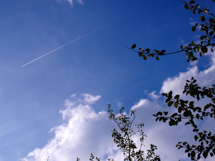 Blue Color Cloud Cloudy Cloudy Day Cloudy Sky Beauty In Nature Blue Branch Branches And Sky Branches Of Trees Cloud - Sky Cloud And Sky Contrail Day Flying Low Angle View Nature No People Outdoors Positiv Thinking Positiv Vibes Sky Tree Vapor Trail White Color
