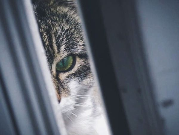 Peek // The random Cat always finds its way to our backdoor looking particularly evil (London, May 2016) Feline Green Eyes Peek Macro Pet Spy Spying Evil Cat Evil Kitten VSCO