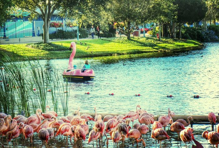 swimming with flamingos..re edit .orlando seaworld.because i like it:) Your Art Is Portable With Caseable The EyeEm Facebook Cover Challenge My Blah Blah Photography Because I Like It