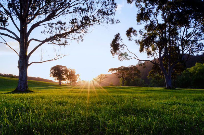 Sunset in a valley Grass Green Color Low Angle View Sky Startburst Sun Sunset Treesin Trentham Park, New Zealand