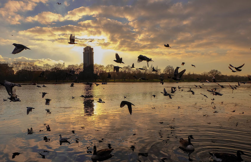 Animal Wildlife Beauty In Nature Bird Building Exterior Cloud - Sky Day Flock Of Birds Flying Lake Lakeside Large Group Of Animals London Nature No People Outdoors Silhouette Sky Spread Wings Sunset Water