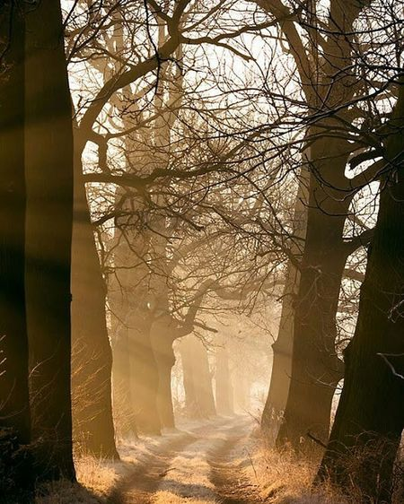 hi good morning my friends EyeEm Gallery EyeEmNewHere Goodmorning :) Tree Thick Sunlight Shadow Branch Politics And Government Sky Foggy Streaming Woods Pine Woodland