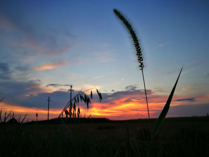 Sky Sunset Cloud - Sky Beauty In Nature Plant Grass Tranquil Scene Tranquility Nature Scenics - Nature Growth Environment No People Land Landscape Field Orange Color Crop  Outdoors Rural Scene Timothy Grass Stalk