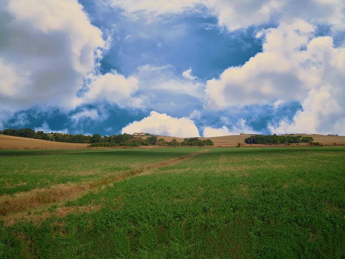 A field near
