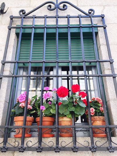Flower Window Architecture Nature Spring SPAIN
