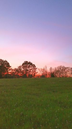 Sunsets Of Eyeem Landscape Of Eyeem Sky Outdoor Photography Sunset Trees Landscape_photography Pasture Wildflowers Springtime Easter Flowers Landscape Clouds Purple Pink 🔥FIRE IN THE SKY 🔥 Landscapes With WhiteWall