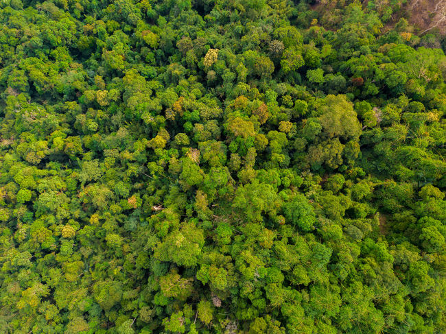 DJI X Eyeem Drone  Abundance Backgrounds Beauty In Nature Day Dronephotography Forest Freshness Full Frame Green Color Growth Leaf Lush Foliage Nature No People Outdoors Plant Plant Part Scenics Skypixel Tea Crop Tree