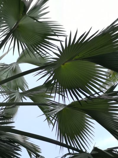 Tree Tree Area Palm Tree Frond Coconut Leaf Plant Part Clear Sky Tree Trunk Summer