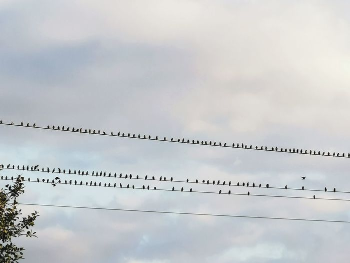 Low angle view of birds perching on cable