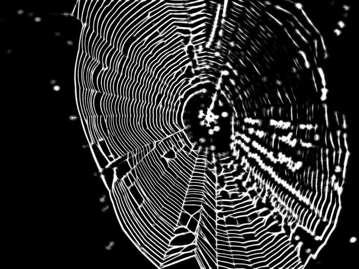 Abstract Blackandwhite Close-up Dark Elysium Focus On Foreground Natural Pattern Nature Outdoors Pattern Psychedelic Spider Spiderweb Web