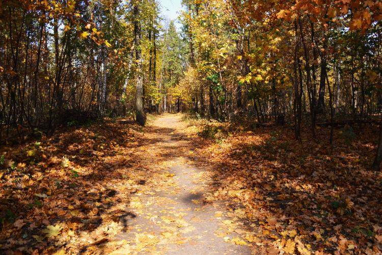 Nikon Nature Colors Russia Morning пейзаж утро Autumn Landscape Tree Golden Autumn Золотая осень Warm Atmosphere Tree Forest Tree Area Leaf WoodLand Branch Walkway Pathway
