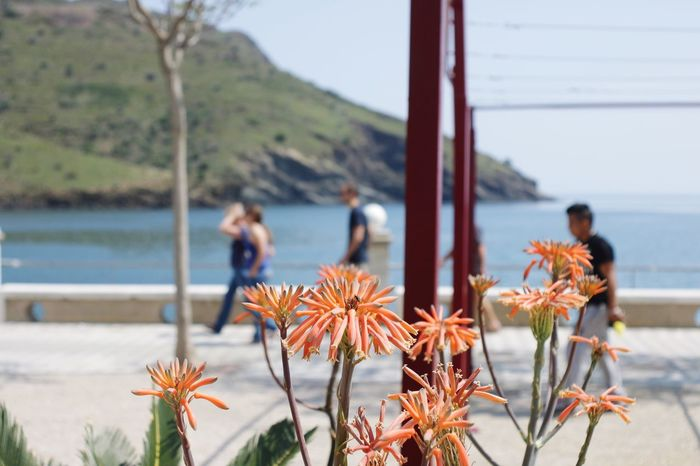 Good morning :D Simple Quiet Love Portbou Old Lens Plant Flower Flowering Plant Day Sea Beauty In Nature