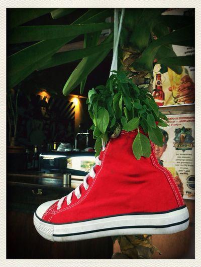 Flower Pot Converse Red