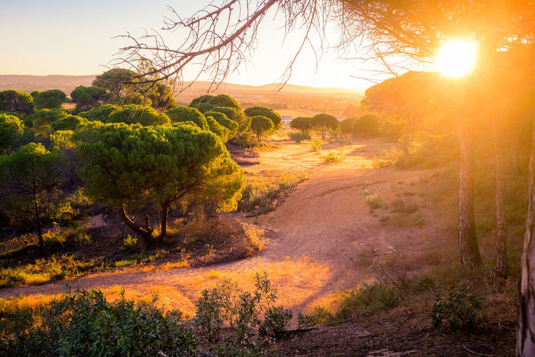 Vacations Holiday Flower Growth Light And Shadow Sunrise Sun Sunset Sand Dune No People Summer Outdoors Sunny Paradise X100S Beauty In Nature Portugal Algarve Sand Landscape Daydream Scenics Nature Tree Golden Hour