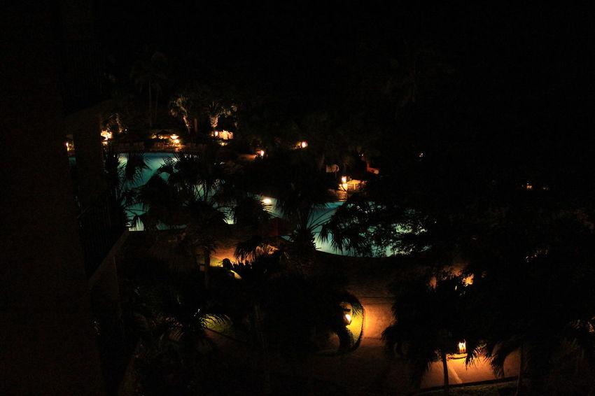 Palms Trees Lights And Shadows Night Pool