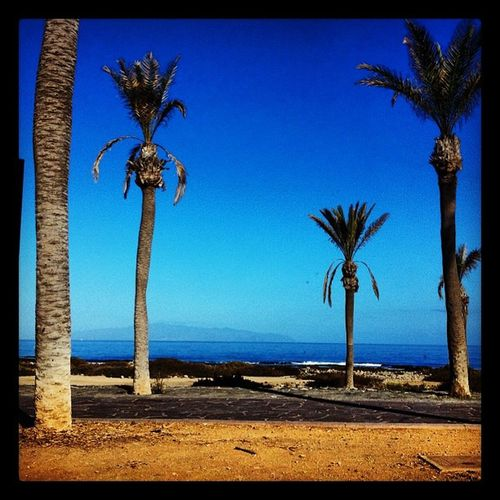 The place to be ! Tenerife